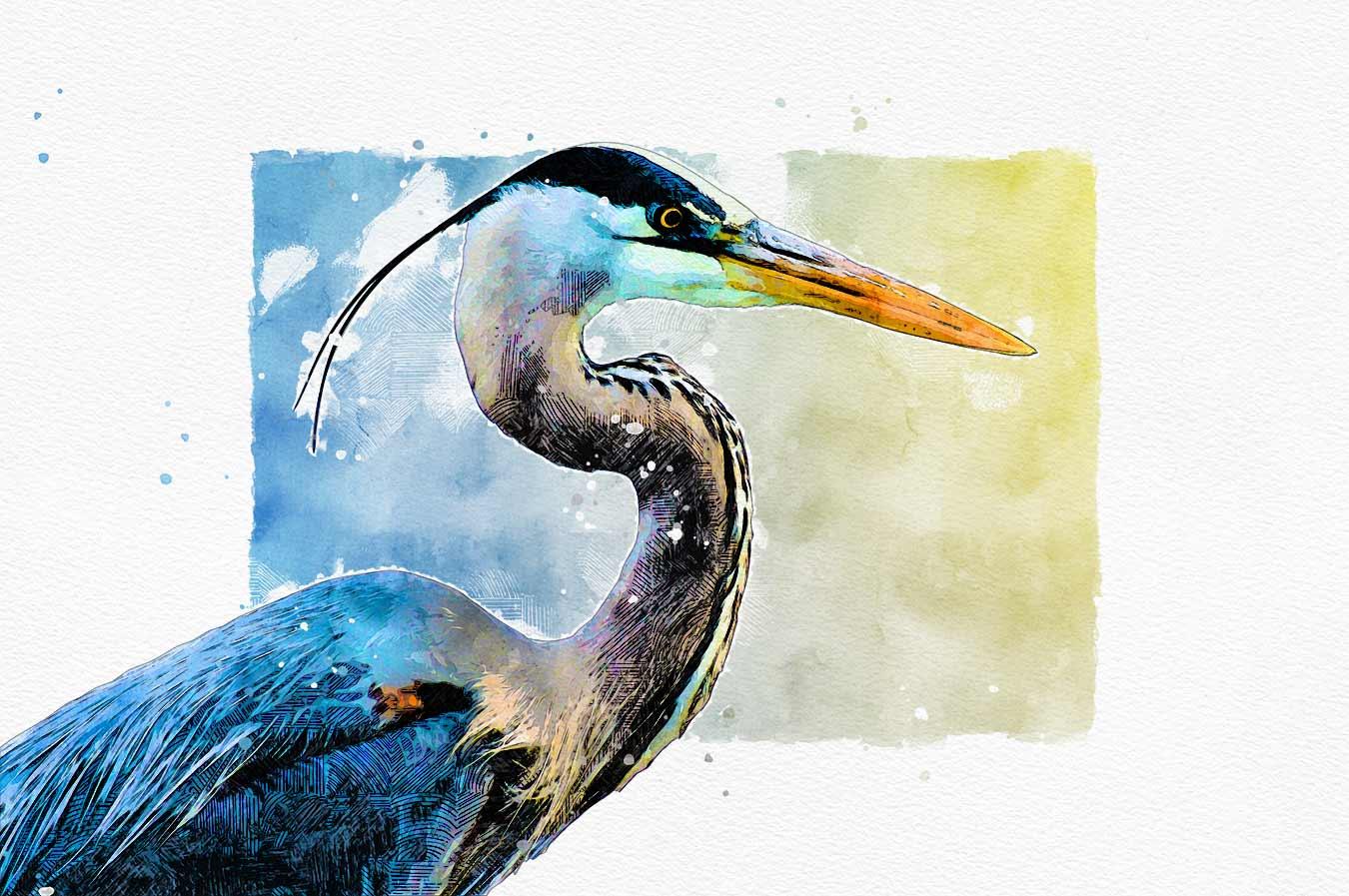 blue-heron_illustration_sm